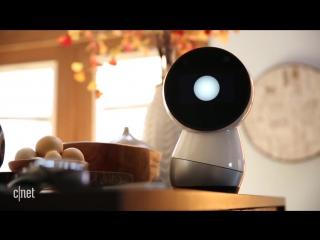 Jibo robot review