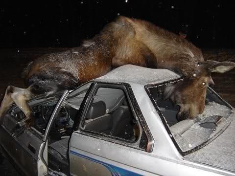 В Селижаровском районе авто столкнулся с лосем