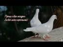С Прощенным Воскресеньем! Простите и не держите зла!.mp4