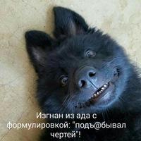 Анкета Максим Лапшин