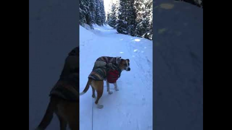 Cat Rides Dog in the Snow - 984982