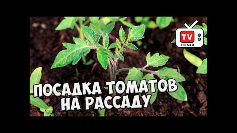 Посадка томатов на рассаду 🍅 Полная видео инструкция от HITSAD TV смотреть онлайн без регистрации