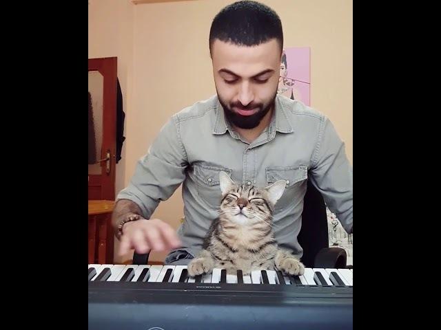Pianist cat 🎹🐈