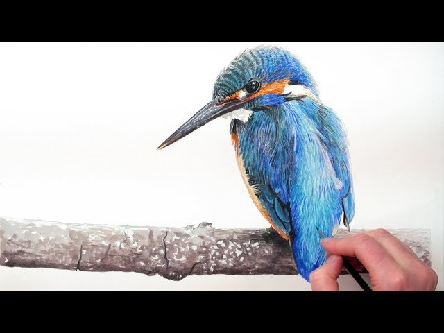 How to paint a vibrant Kingfisher bird in watercolour (forget the limited palette!) with Anna Mason