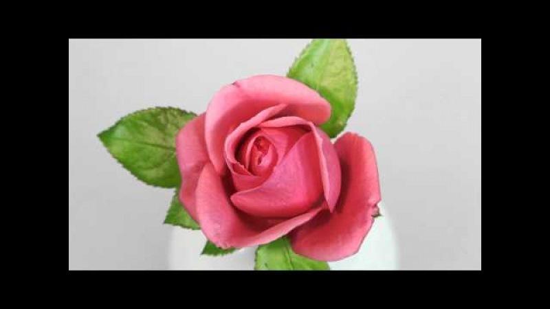 Rotating Timelapse Blossom Rose