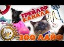 Трейлер канала ЗОО ЛАЙФ. Бордер колли Ёжик. Лабрадор Зуф. Сиамскй кот Марик.