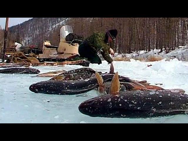 ШОК!... 10 НЕВЕРОЯТНО крупных уловов на зимней на рыбалке 2017 7