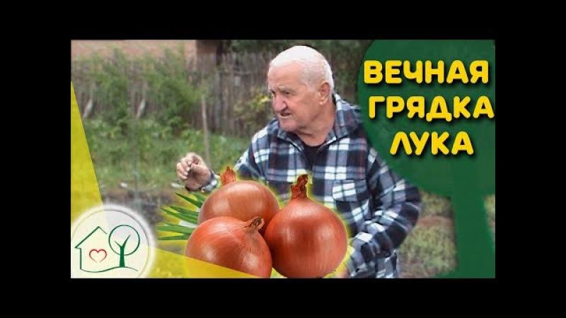 Бублик Б.А. Вечная грядка лука 🔃 Огород без хлопот