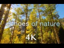 [4K] Echoes of Nature A 2 Minute Relaxation Video (ft. Travis Revell) 432HZ