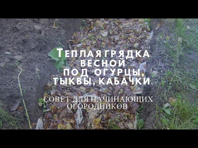 Теплая грядка весной для посадки огурцов,тыкв, кабачков