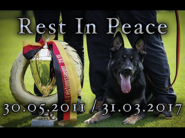 R.I.P BollE Ja Na Ka protection defence compilation Best Working Schutzhund IPO Dog