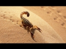 Существа которым не страшна ЯДЕРНАЯ ВОЙНА! Самые живучие в мире!