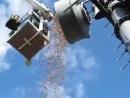 Дятлы засунули в антенну связи 150кг желудей