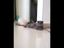 Жучка за кошку