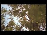 Песня Узника Бахыт