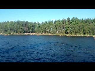 Горбатый кит 19 05 2018 г Высоцк (Выборгский залив)