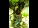 Маленький водопад в городском парке Сидзуока