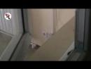 [Новости Шеремета Девять с половиной] Сироты задолбали жителей дома шумом и пьянками. Real video