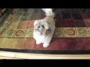 Cody, the Screaming Dog