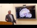 Рептильный мозг человека