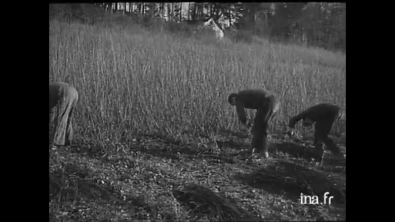 Losier - Vidéo Ina.fr