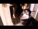 talking dog.mp4