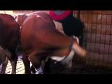 01 Немец. Перец. Колбаса - Германская головоломка (2013) - Октоберфест, Oktoberfest