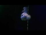 Алегрия : Цирк Солнца / Alegria : Cirque du Soleil , 1999