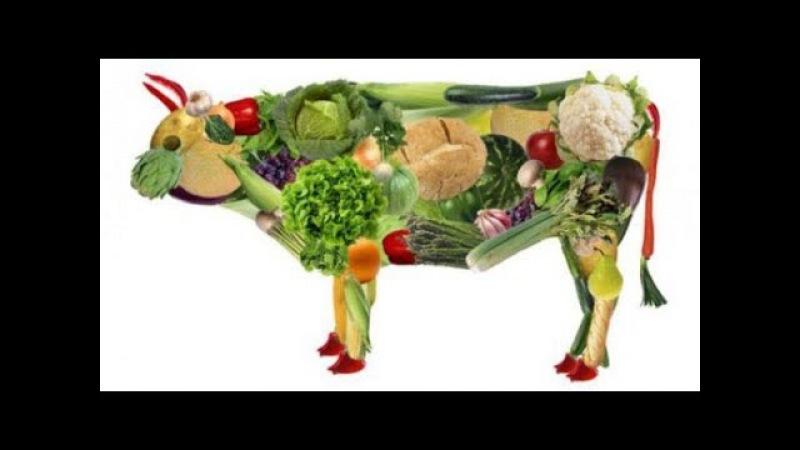 Сквашивание основа Природного здоровья и питания