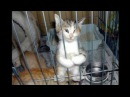 Смешные кошки приколы про кошек и котов 2017 77 Котики это всегда смешно и мило