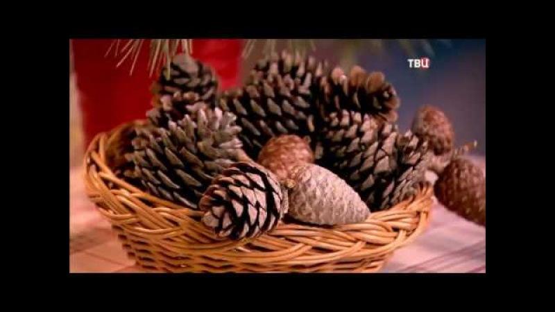 329 Хвоя и почки – средство от простудных заболеваний » Freewka.com - Смотреть онлайн в хорощем качестве