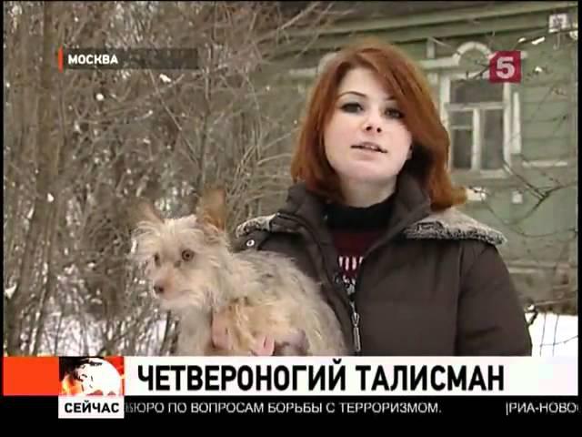 Московские драконы -- самая актуальная собачья порода