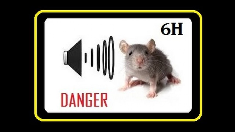 Ultrasonic Rodent Repellent * Deafening Sonic Pest Remover * Sound to Drive Away RATS from Home