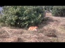 Хорошо в деревне летом или спортивные будни кота Иннокентия