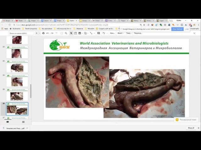 Паразитарные болезни птиц: гистомоноз и кокцидиоз