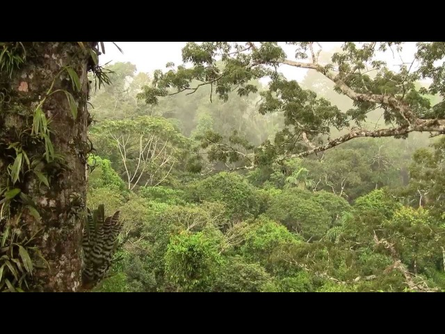Rain in Amazon Rain Tropical Forest Canopy Дождь в дождевом лесу Амазония 1924sp