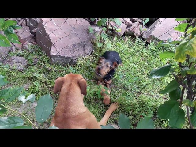 Джесси и ее друг Спайк. Jessie.