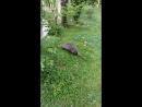 Вот такого зверя встретили на прогулке в парке