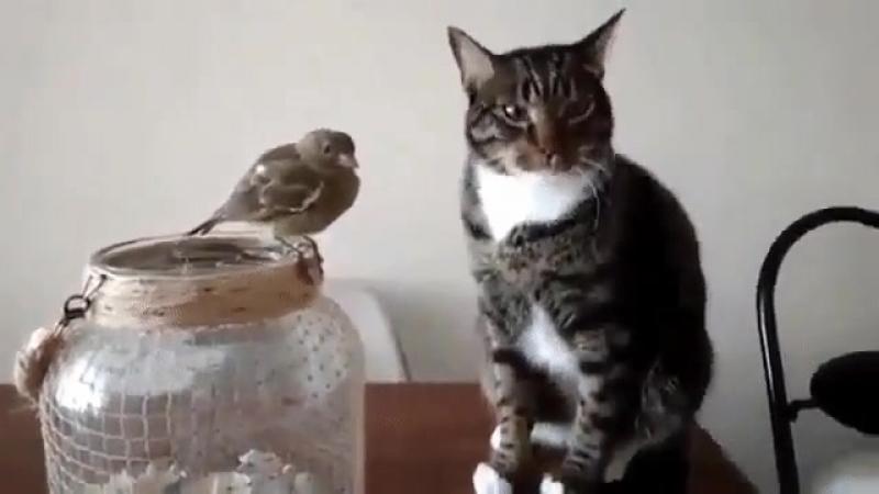 Сказали....птичку НЕ ТРОГАТЬ!
