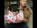 Питбули - самые опасные в мире собаки - говорили они