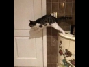 Когда кто-то жрет на кухне без тебя