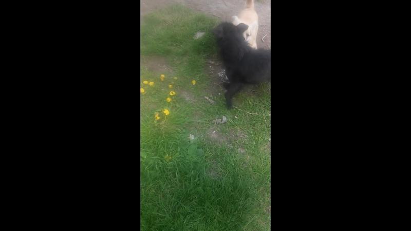 собачье бой раунт 2