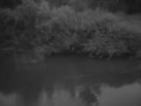Владимир Нечаев - Поют в лесу соловьи
