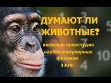 Думают ли животные? (1970) реж. Феликс Соболев