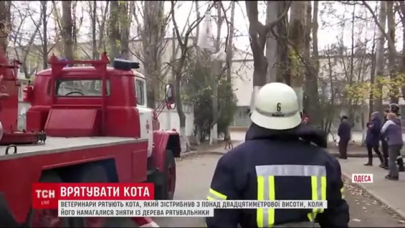 В Одессе неудачное спасение кота сняли на видео