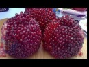 The BEST Way To Open Eat A Pomegranate