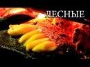 Дикая кухня - КАМЕННАЯ СКОВОРОДА | Hot Stone Cooking lbrfz re[yz - rfvtyyfz crjdjhjlf | hot stone cooking