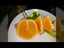 Домик для цитрусовых Татьяны Кузьмук Апельсин