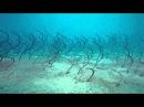Трапеза морских угрей — будто кадры с другой планеты