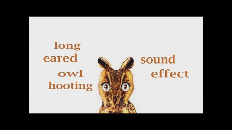 How A Long Eared Owl Hooting - Sound Effect - Animation